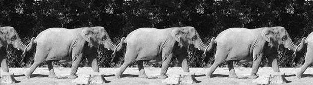 Elephant Chain