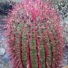 cactus-248289_640