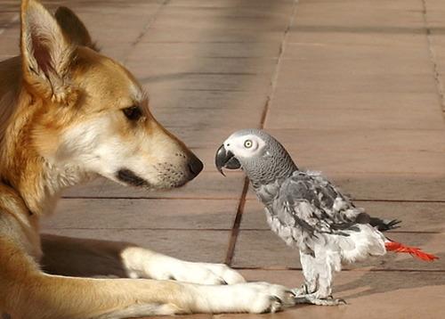dog_vs_parrot