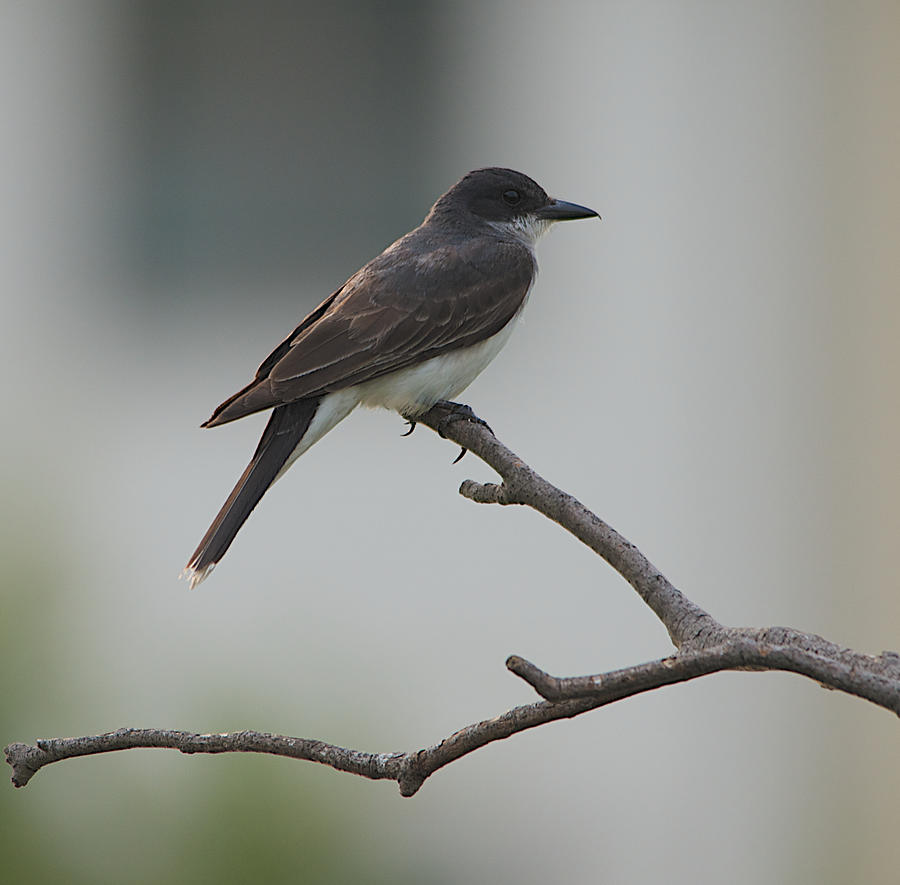 bird-on-a-branch-kathi-isserman