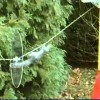 Mission Impossible Squirrel – Video
